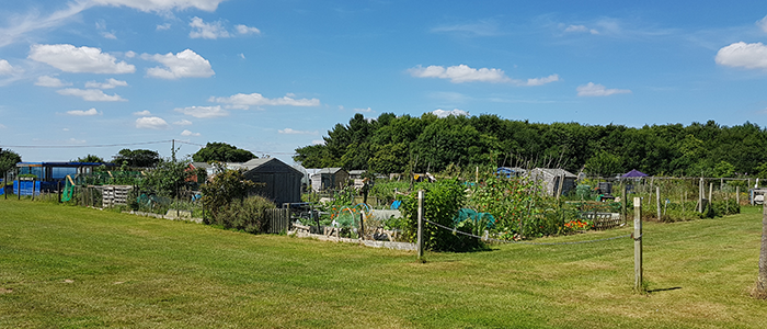 Hobbs Allotments
